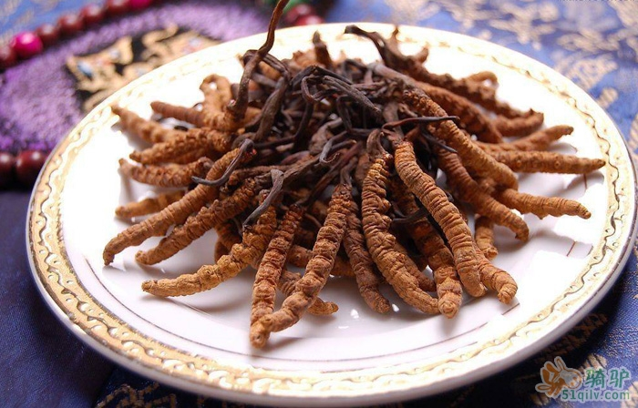 虫草花的功效与作用,正确吃虫草花,健康又营养!