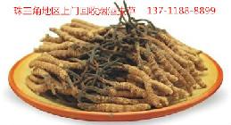 广州回收野生虫草